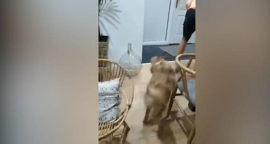 1:1 gegen den Hund
